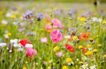 hình nền hoa cỏ dại