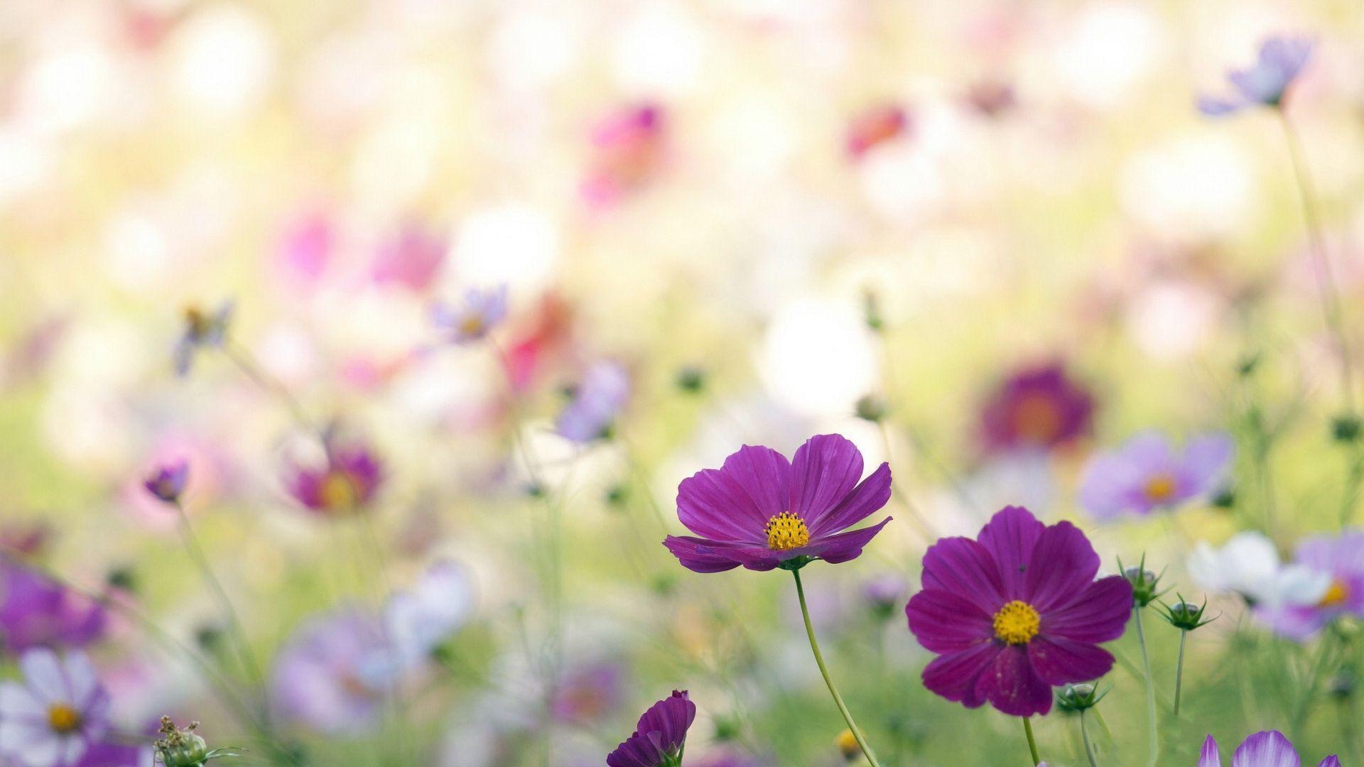 hình ảnh hoa cỏ dại đẹp