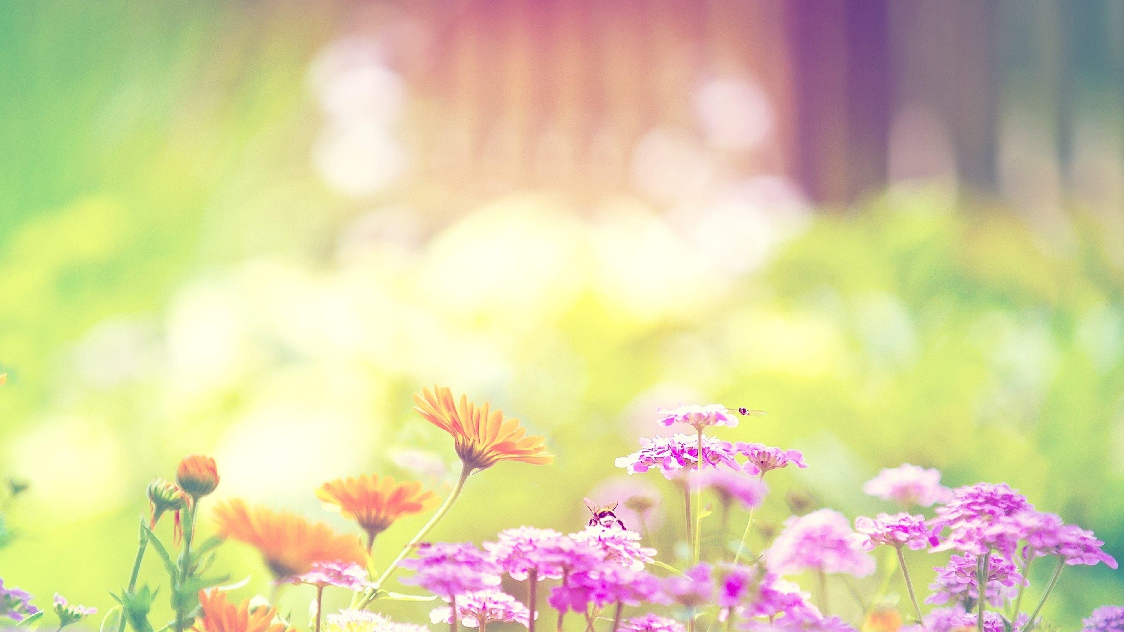 tải ảnh hoa dại đẹp