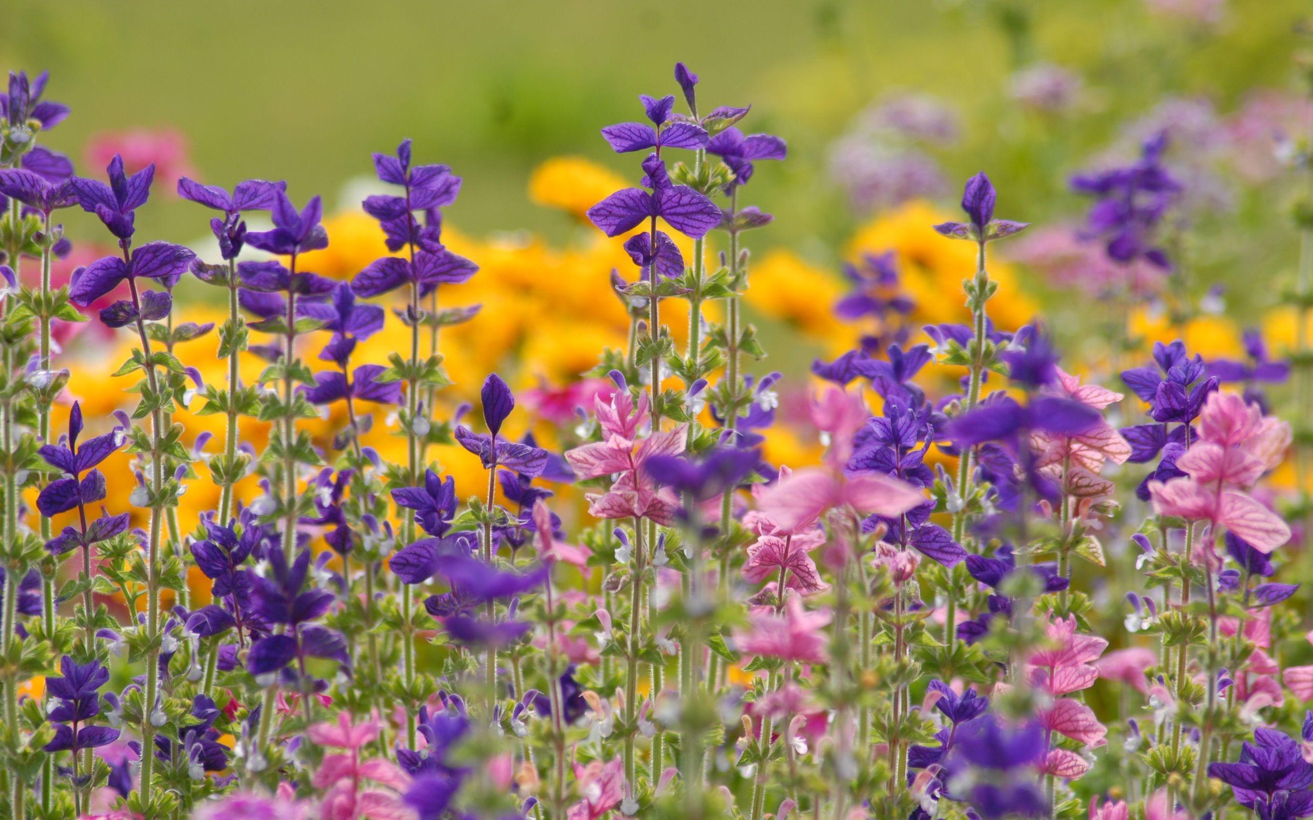 xem ảnh hoa dại đẹp nhất