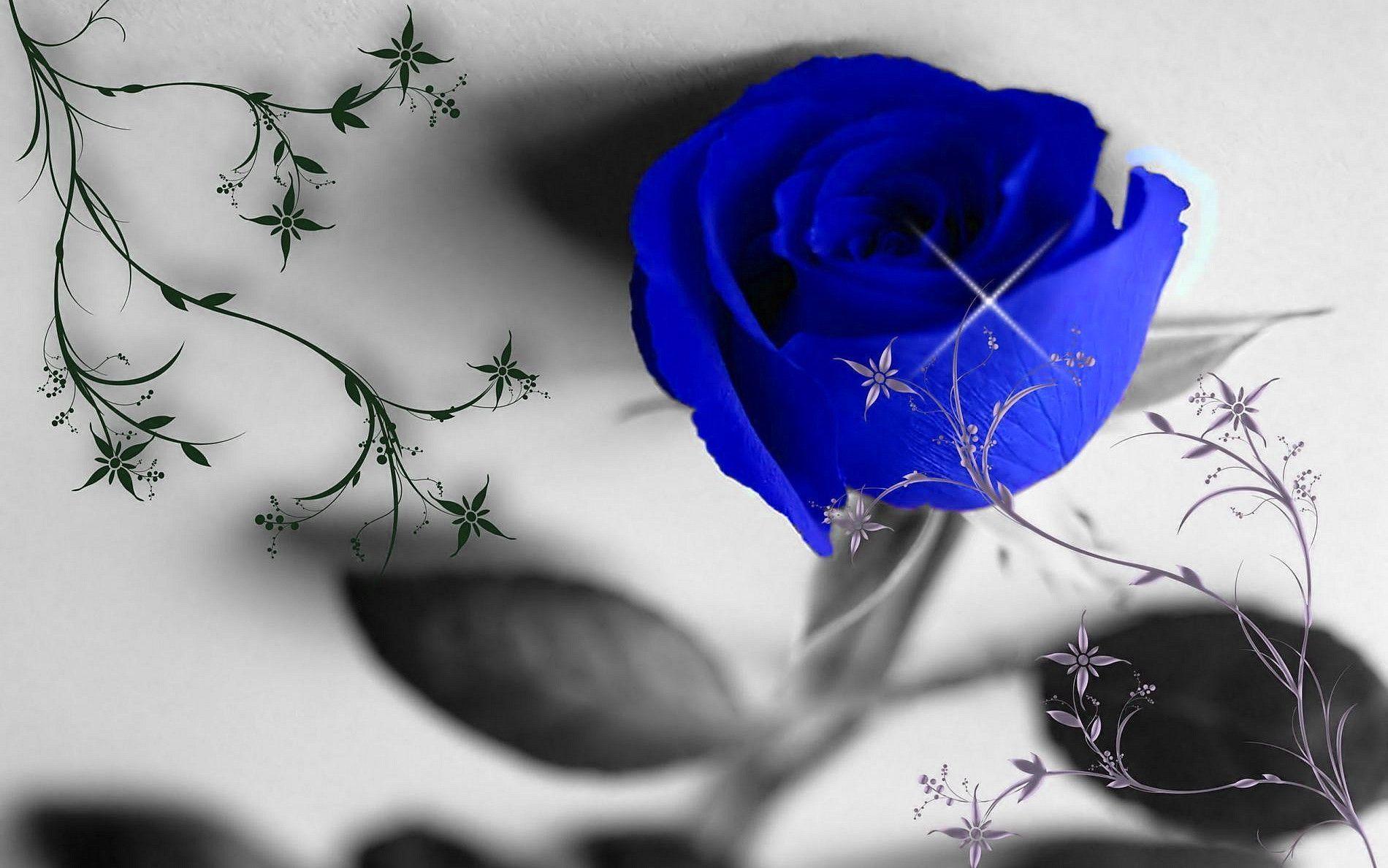 hinh anh hoa hong xanh 11