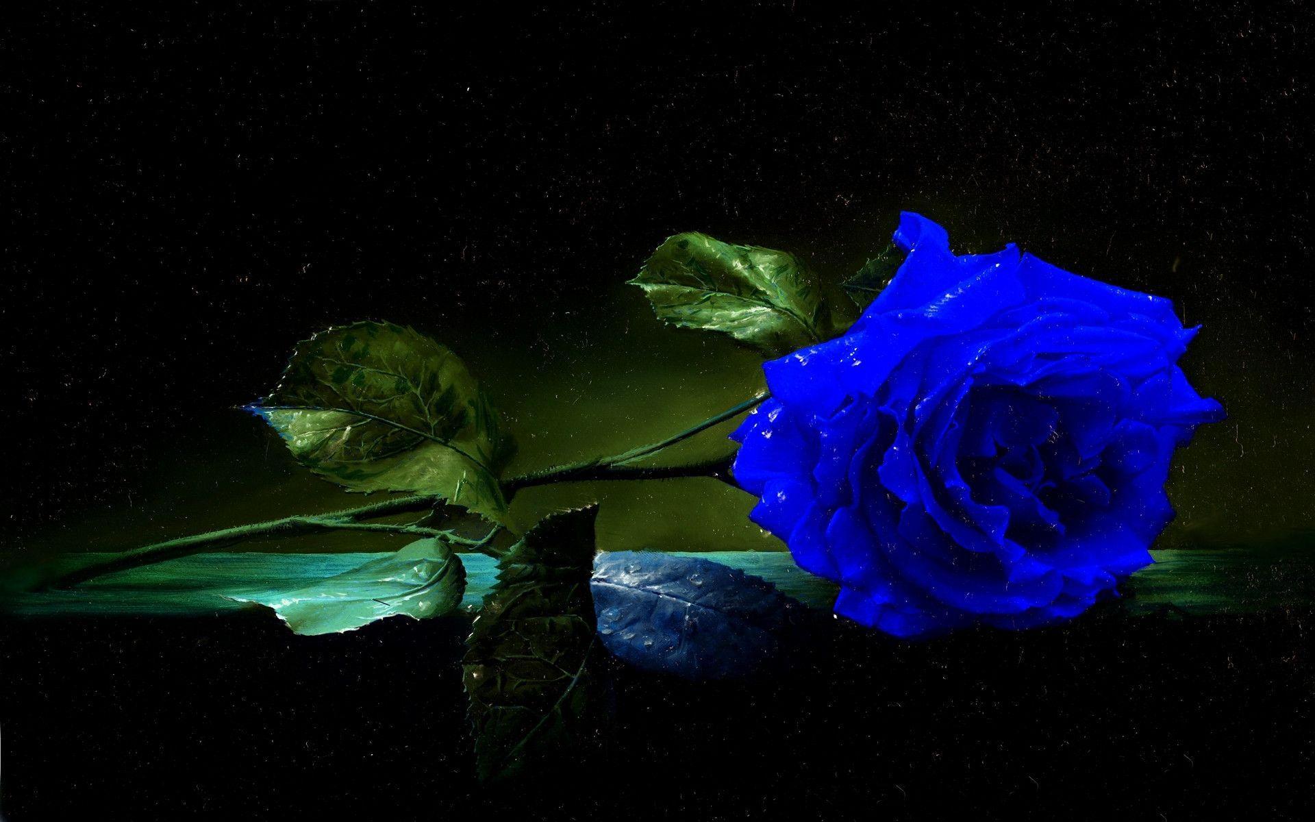 hinh anh hoa hong xanh 12