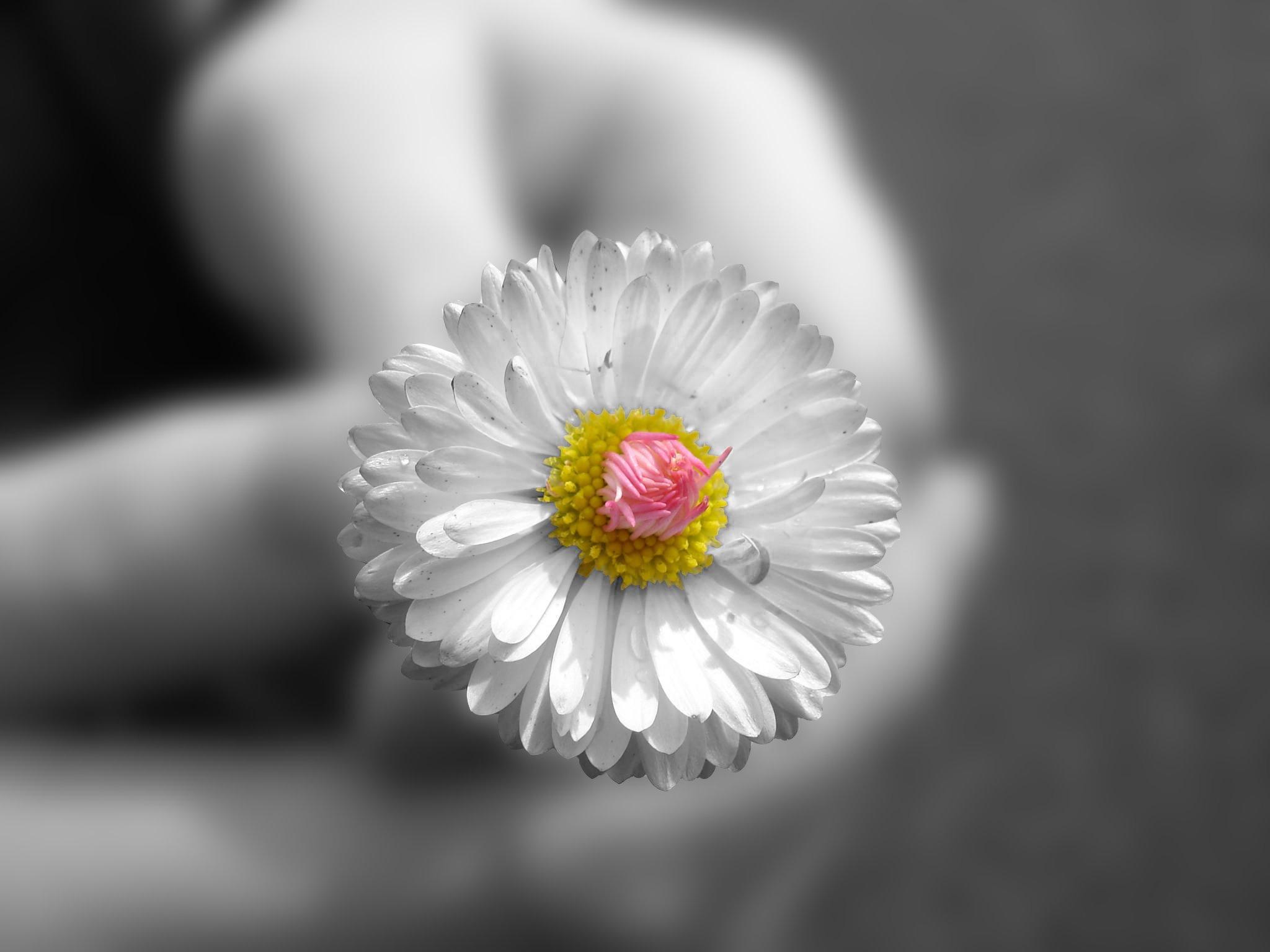 hình nền đẹp về loài hoa
