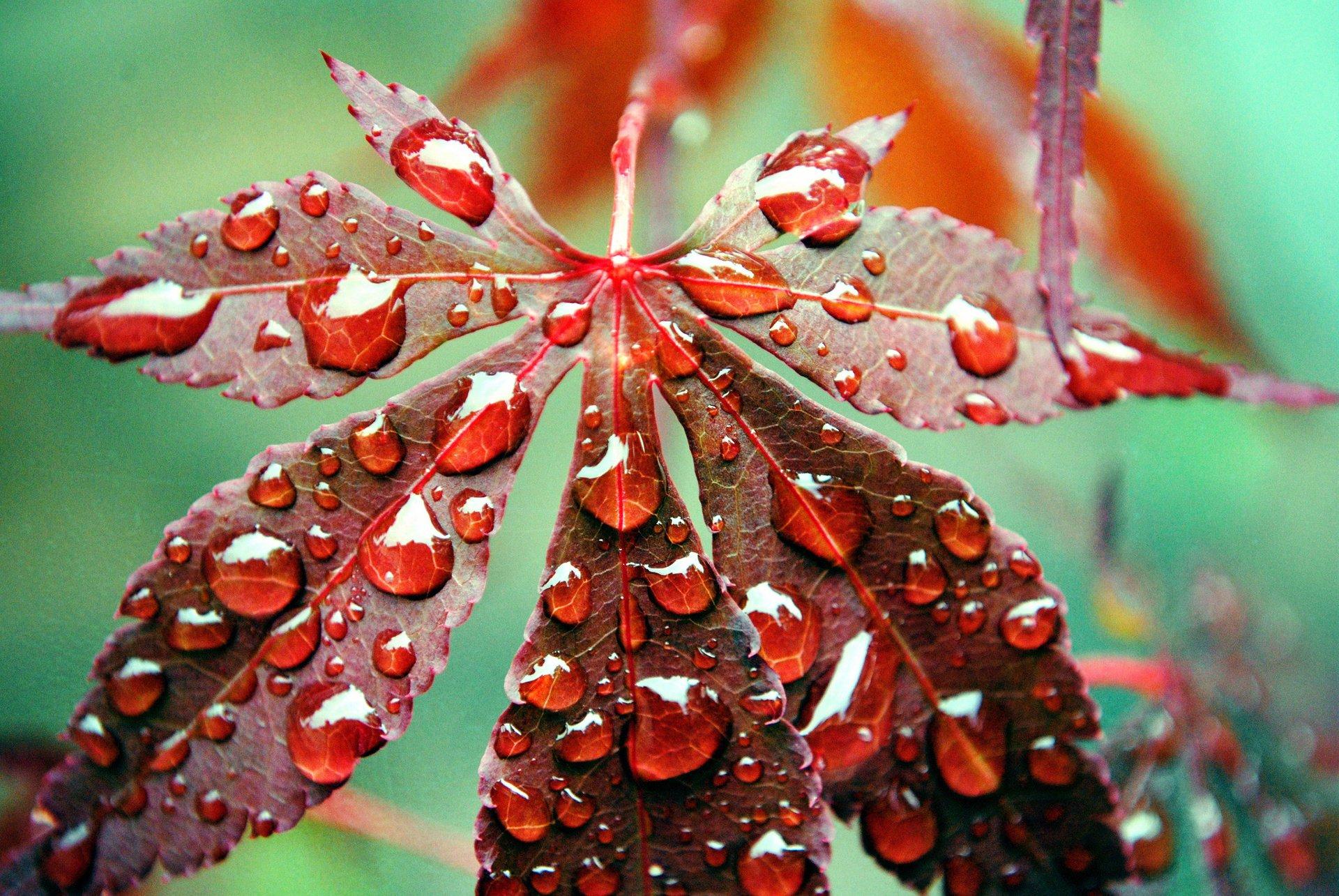 hình ảnh giọt sương trên lá
