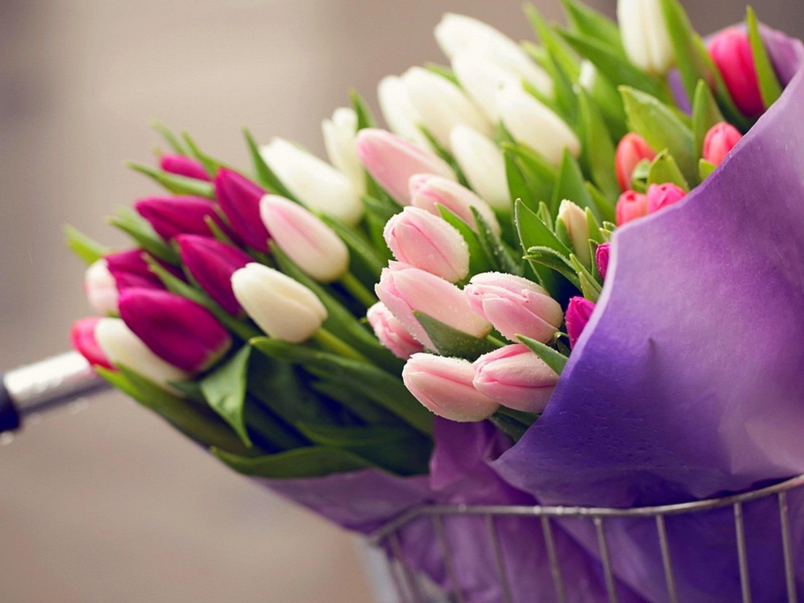 hinh nen hoa tulip 18