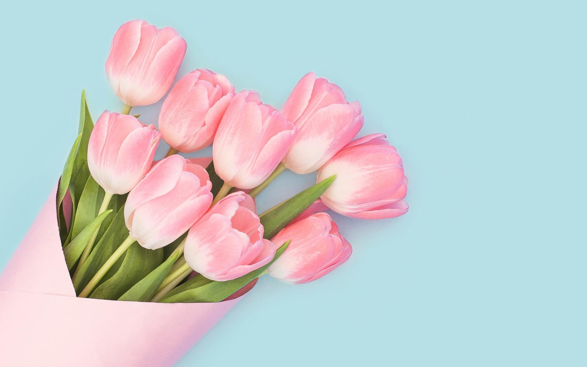 ảnh nền hoa tulip đẹp
