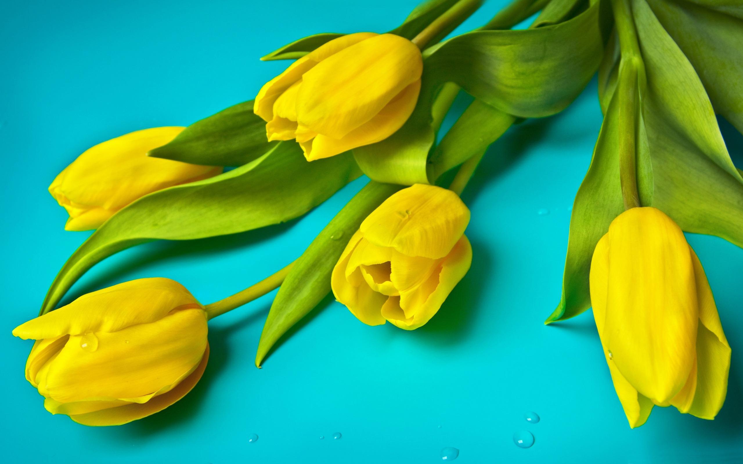 hinh nen hoa tulip 6