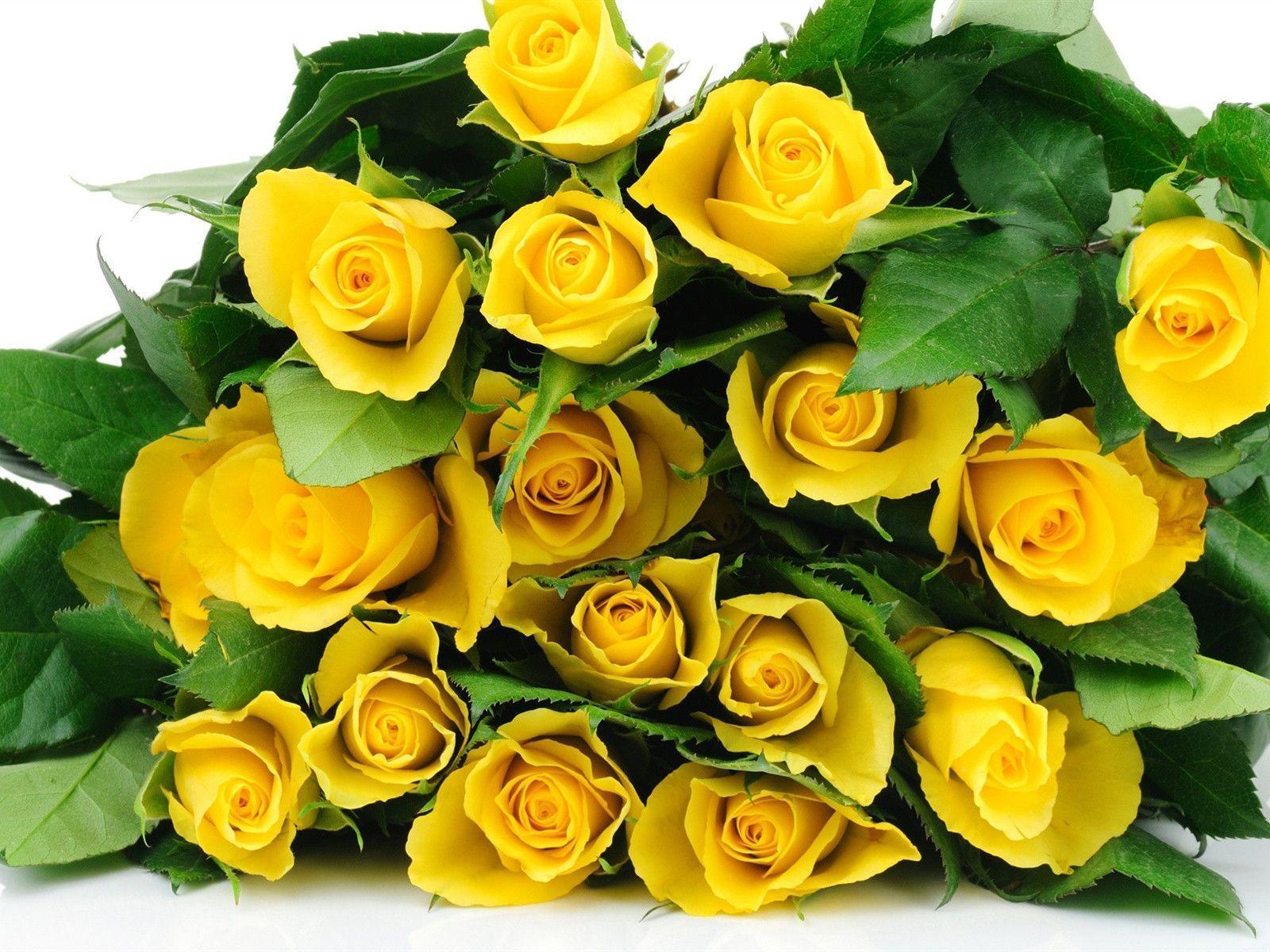 tải ảnh hoa hồng vàng