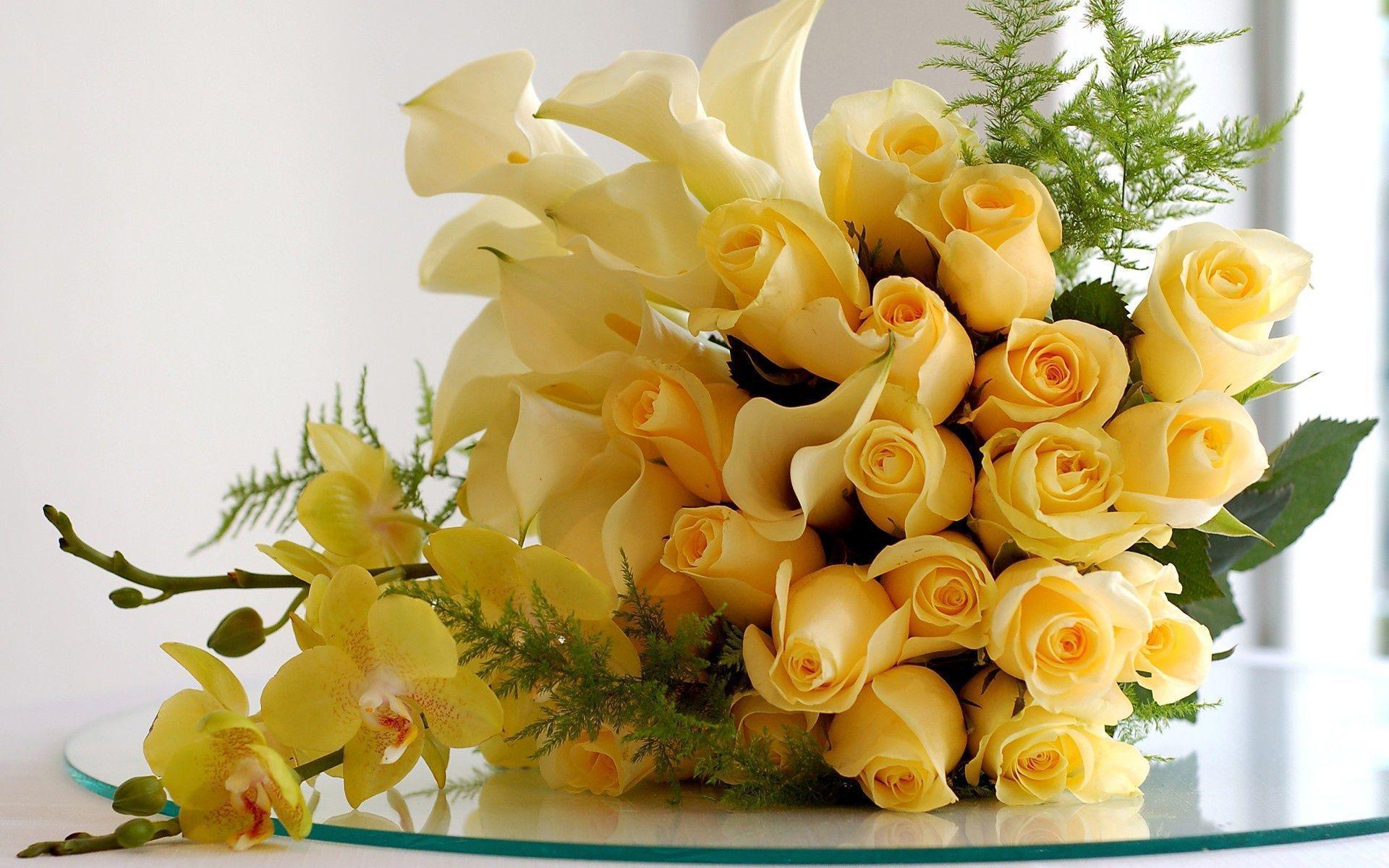 xem ảnh hoa hồng vàng
