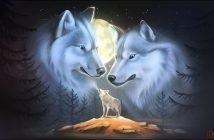 Hình nền chó sói đẹp dũng mãnh