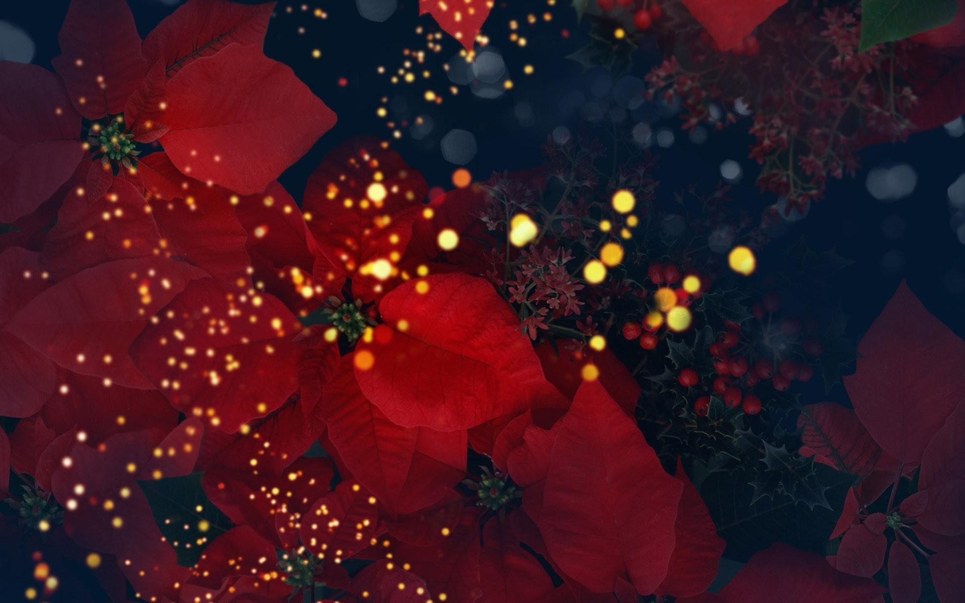 hinh anh hoa trang nguyen 10