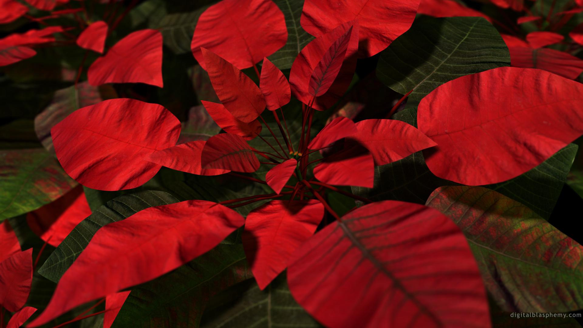 hinh anh hoa trang nguyen 11
