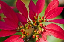 Hình ảnh hoa trạng nguyên