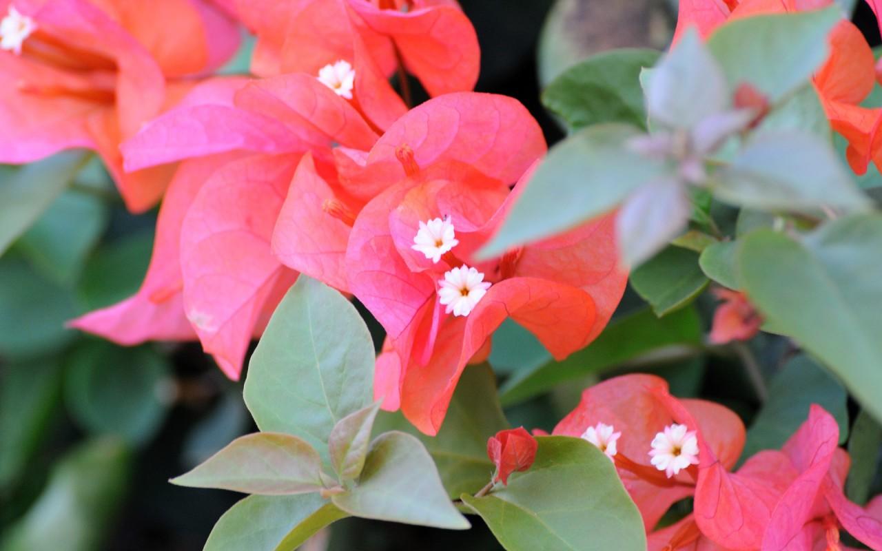 hinh anh hoa trang nguyen 4