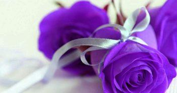 Hình ảnh hoa tình yêu đẹp nhất