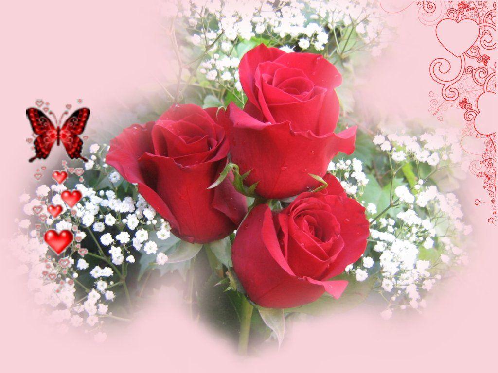 ảnh hoa hồng lãng mạn