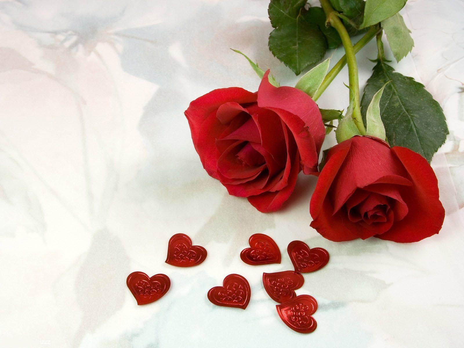 tải ảnh hoa hồng tình yêu đẹp nhất