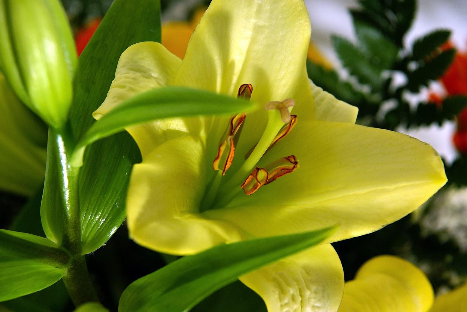 Xem ảnh hoa lily đẹp nhất