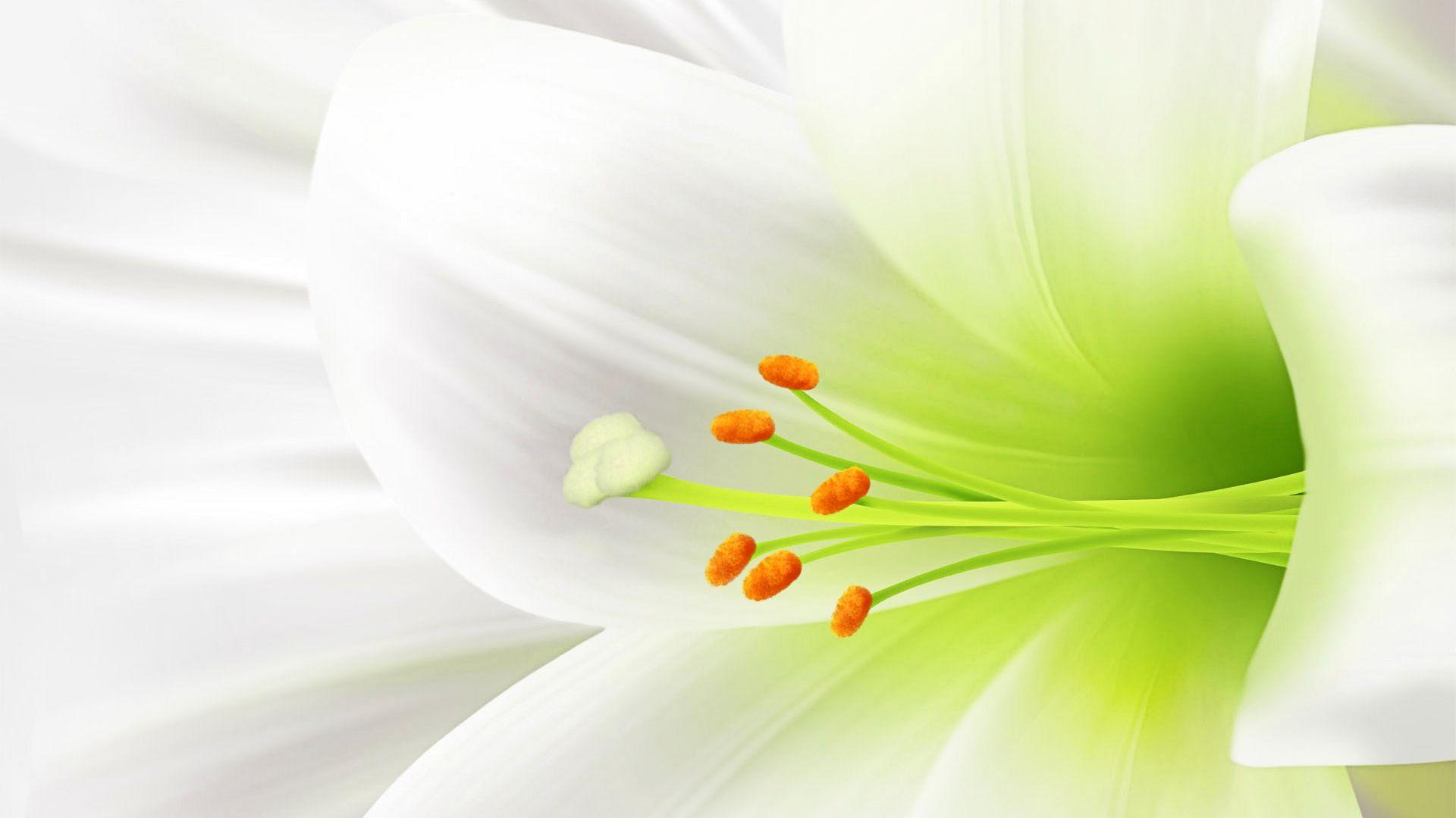 anh hoa lily dep 9