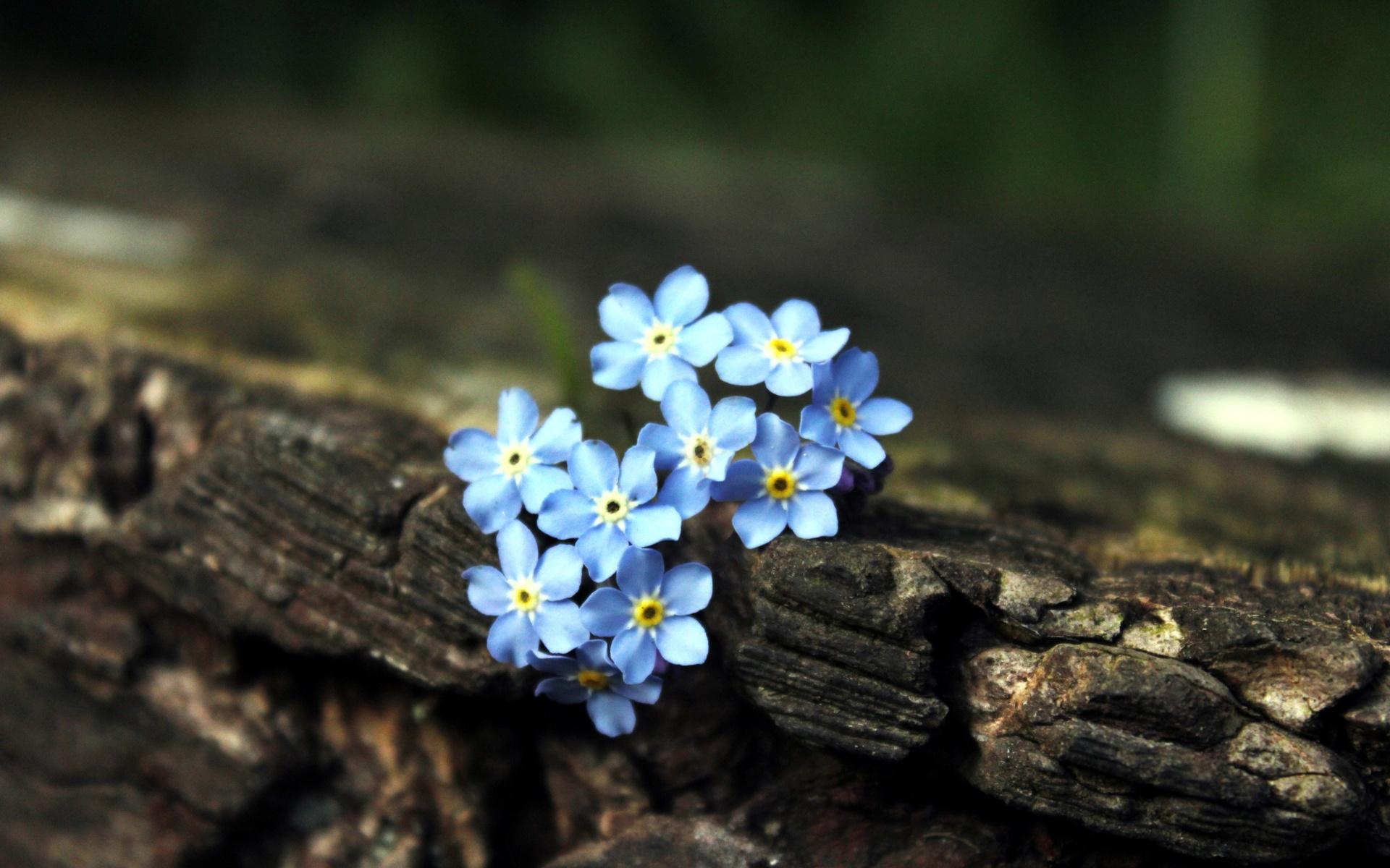 anh hoa luu ly dep 4