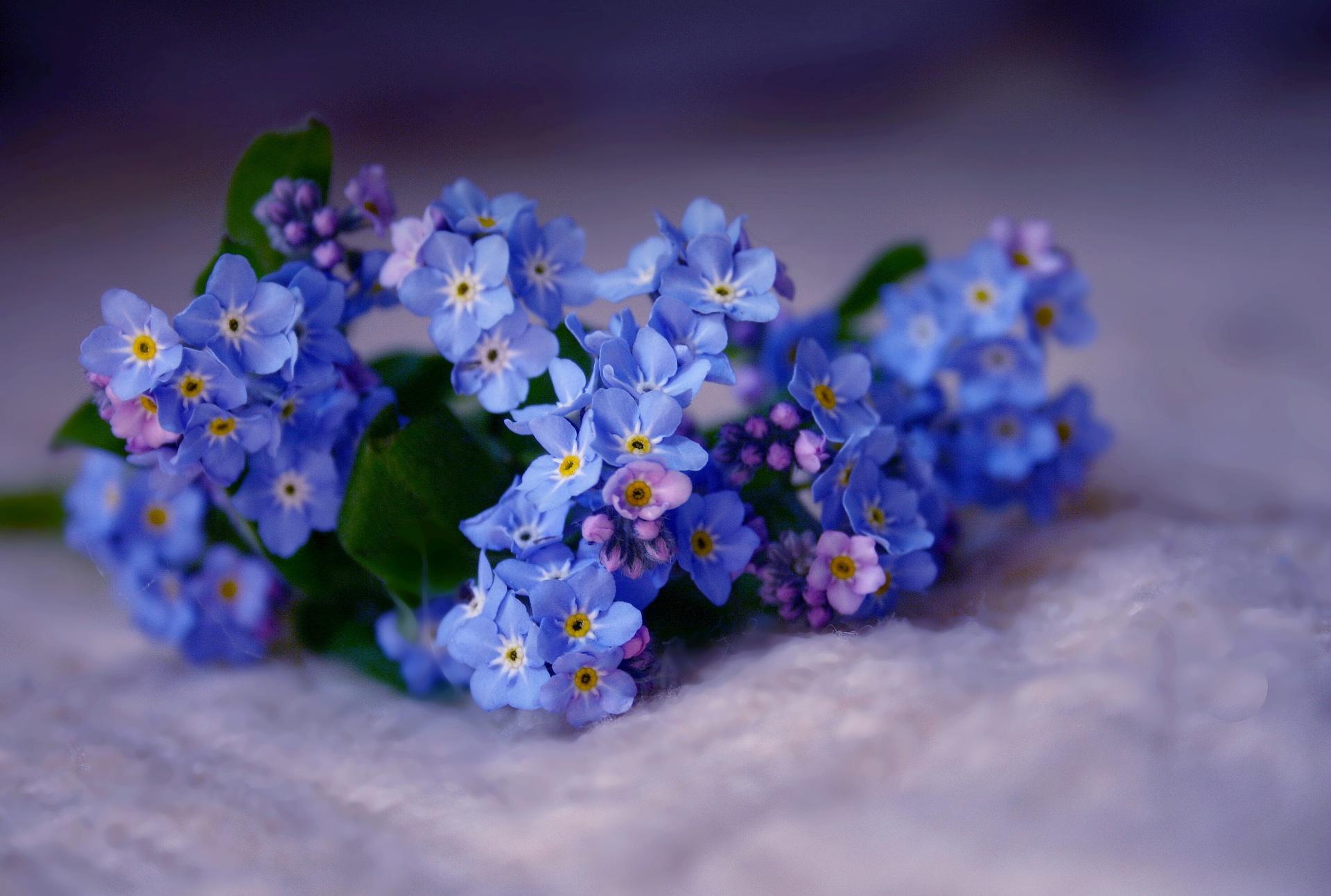 anh hoa luu ly dep 5