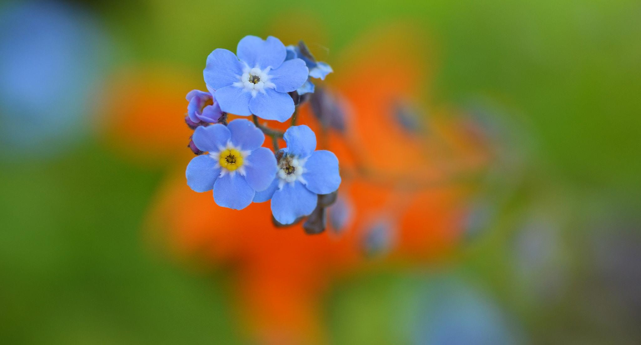 anh hoa luu ly dep 6