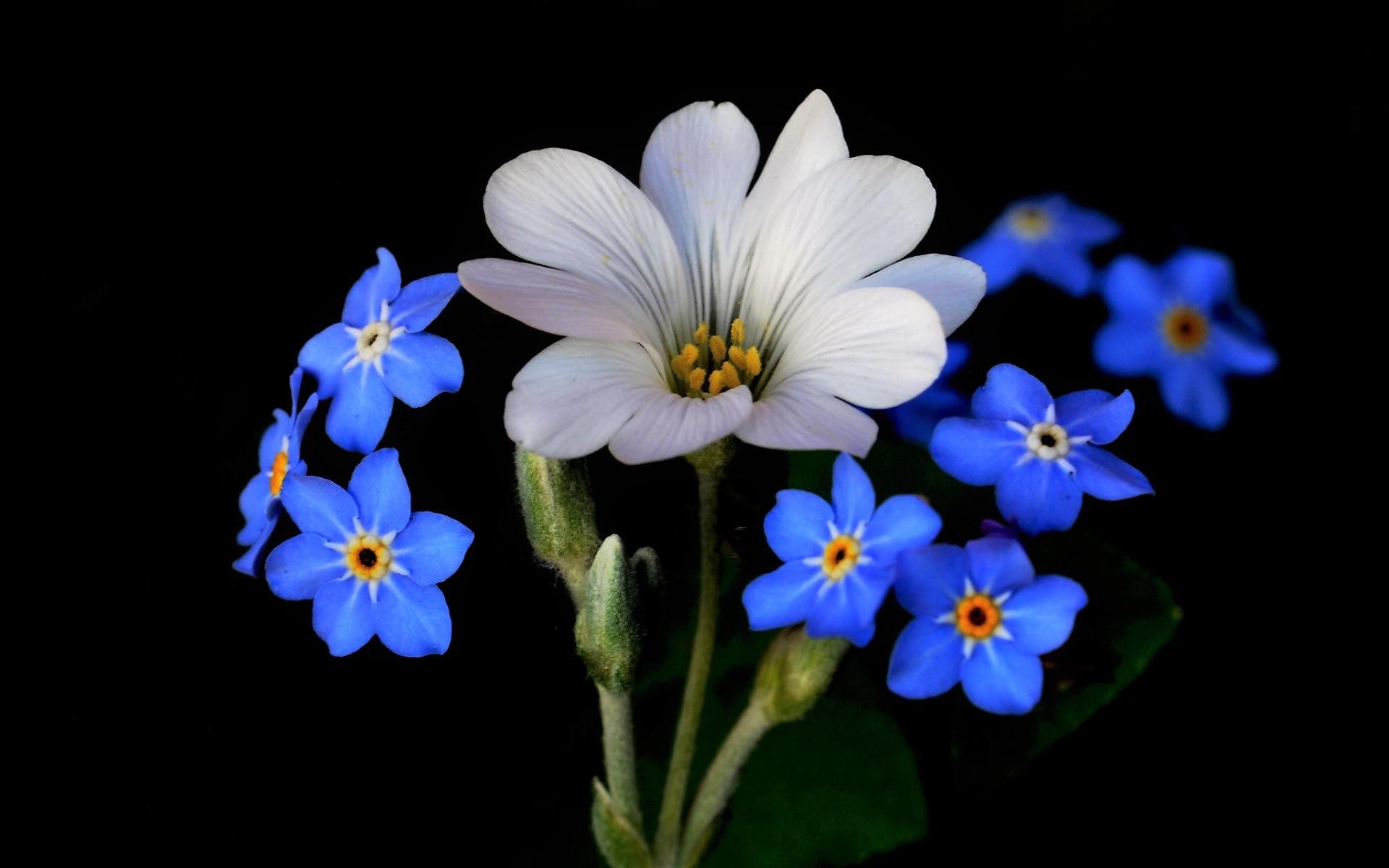 anh hoa luu ly dep 7