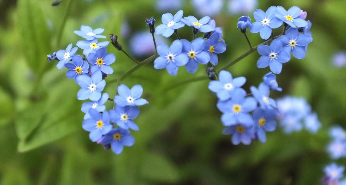 anh hoa luu ly dep 8