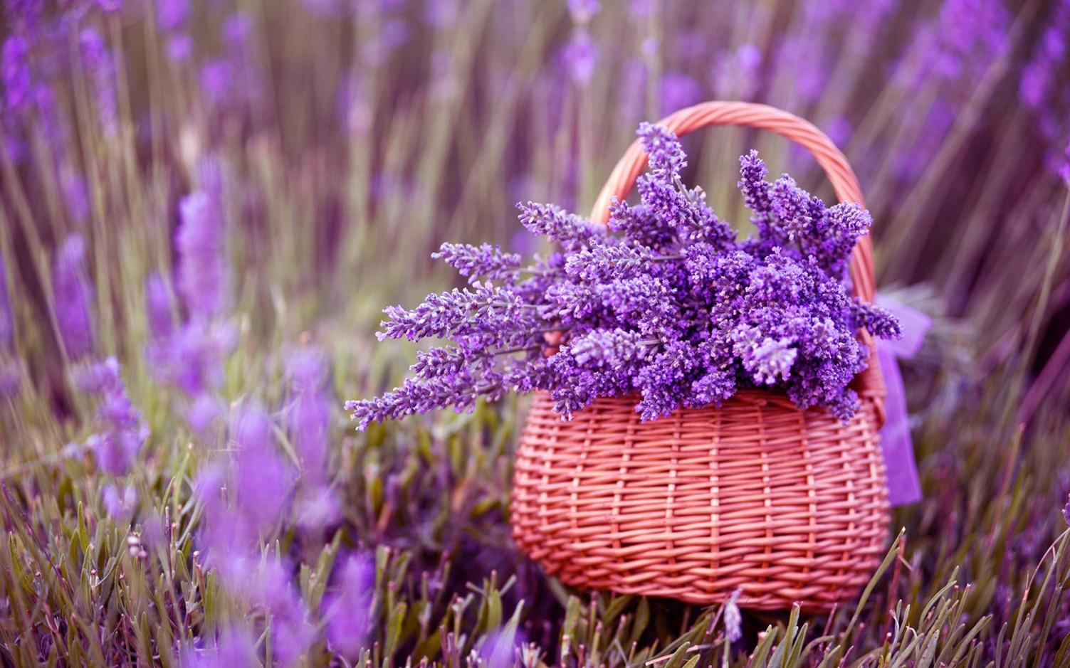 hinh anh hoa oai huong dep 7