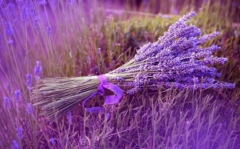 hinh anh hoa oai huong dep 8
