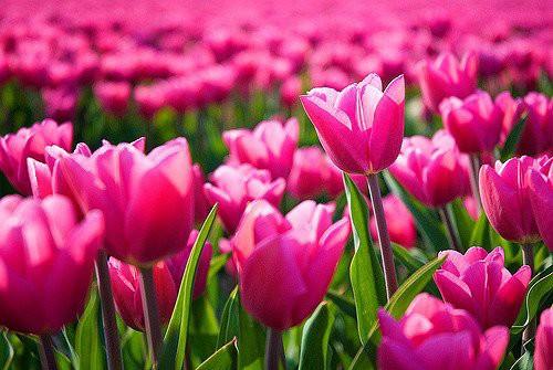 Bộ Hình Nền Những Bông Hoa Đẹp Đến Mê Ly